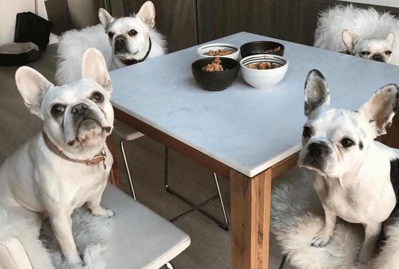 Dinh dưỡng cho chó Bull Pháp cần chú ý những gì?