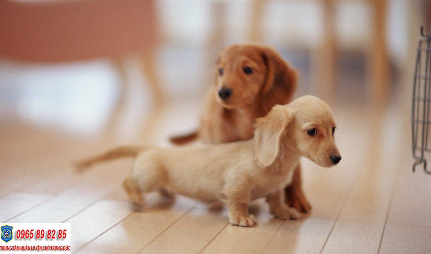 Cách huấn luyện chó con để trở nên ngoan ngoãn và trung thành