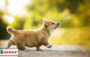 Cách huấn luyện chó nghe lời chỉ với 5 động tác đơn giản