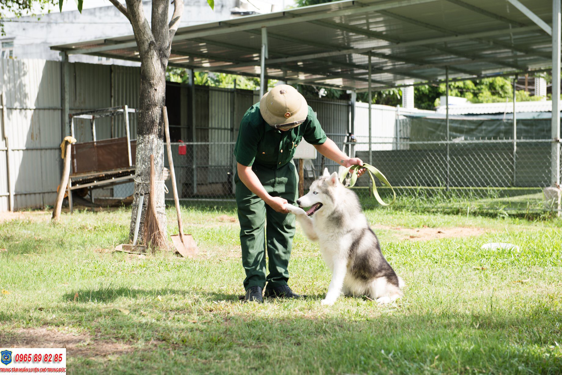 Hướng dẫn cách nuôi dưỡng chó Husky và một số điều cần lưu ý
