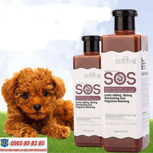 Cách tắm cho chó Poodle đơn giản, dễ dàng và nhanh chóng