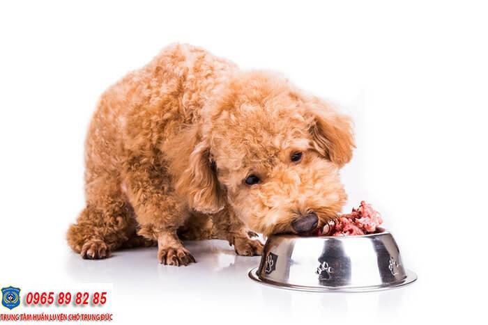 Nên cho chó Poodle ăn gì? Thức ăn dinh dưỡng dành cho chúng