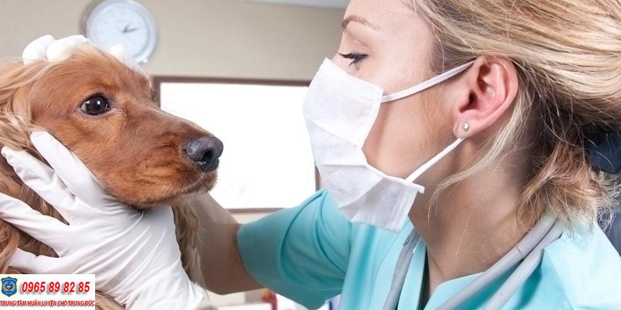 Những điều cần biết về ung thư hạch bạch huyết ở chó