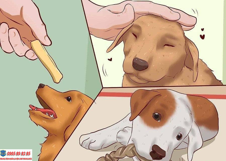 huấn luyện chó ăn khi có lệnh