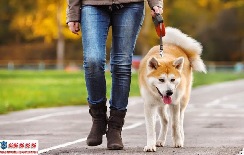 huấn luyện chó đi bên cạnh chủ