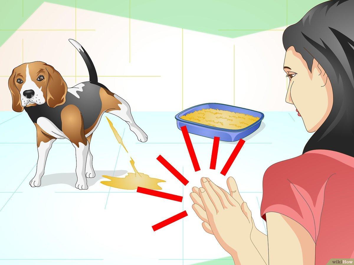 huấn luyện chó đi vệ sinh đúng chỗ