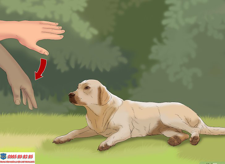 huấn luyện chó lệnh nằm