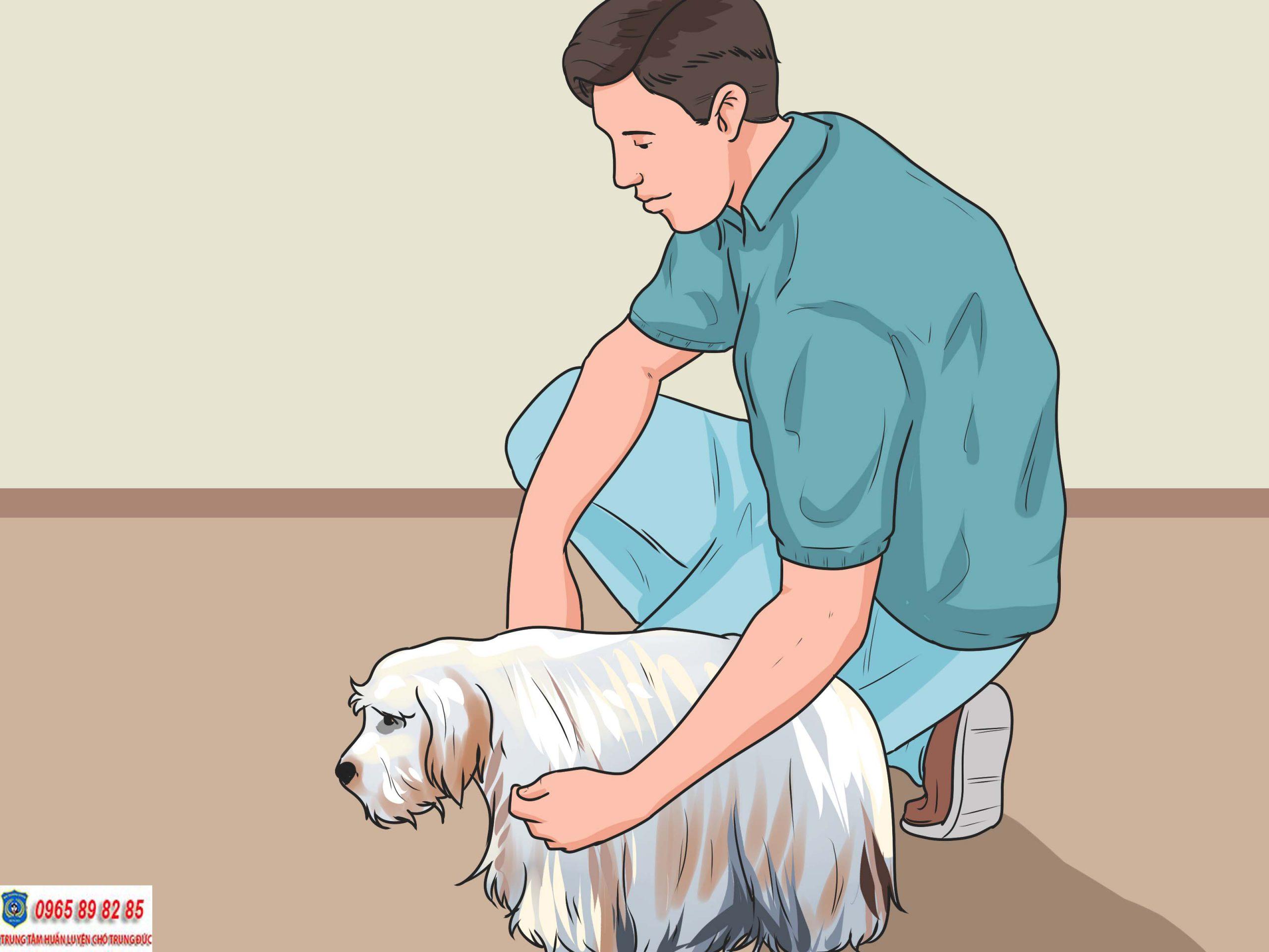 huấn luyện chó lệnh đứng yên