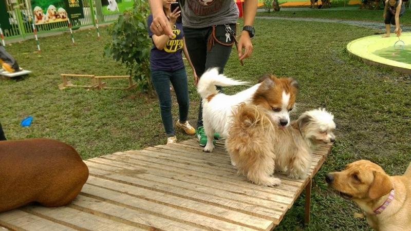 Dịch vụ nhận giữ chó, chăm sóc chó ngày lễ